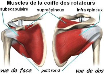 Anatomie de la coiffe des rotateurs